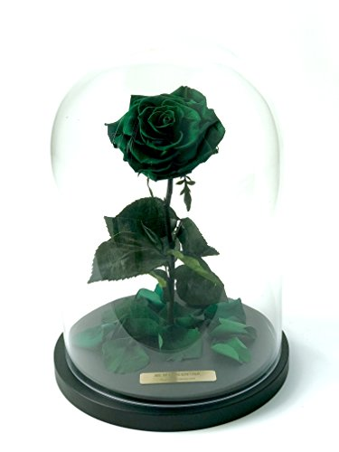 Bella Rose (Forest Green) Fresh Cut Preserved Rose in Glass Cloche. SHE WILL LOVE IT - World's Longest Lasting Roses by Roses & Forever LLC (Image #3)'
