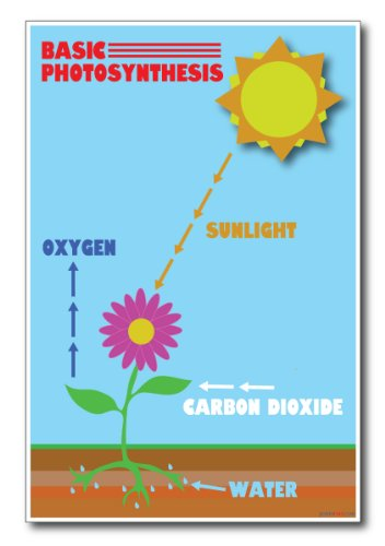 Photosynthesis - NEW Science Poster