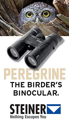 Steiner Peregrine Binoculars, Perfect for Wildlife or Bird Watching, Sporting Events, Black