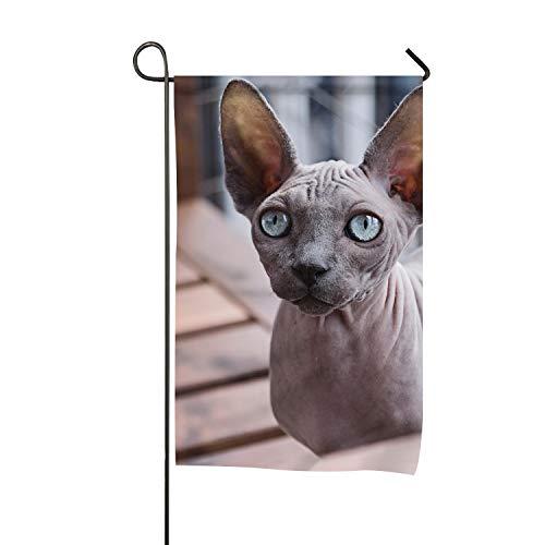 QIFEN Still Hairless Cat welcome home Garden Flag for Yard t