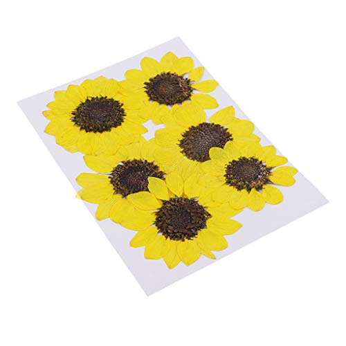 MagiDeal 6 Pieces Pressed Natural Real Dried Flowers Sunflower for DIY Resin Ornament Craft Christmas Xmas Card Making Decoration - Lemon Yellow