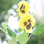 Beautiful-Handmade-Real-Touch-Artificial-Flower-Cloth-Pansy-Viola-Wittrockiana-Bouquet-for-Wedding-Home-Party-Office-Restaurant-Cafe-Vase-Photography-Decoration-Gift-Bunch-of-6Yellow