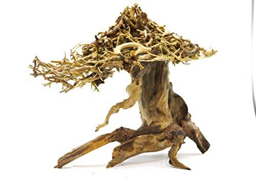 Aqualexs Bonsai Driftwood for Aquarium (Mushroom Style)