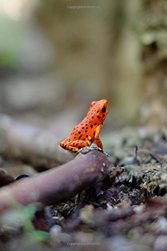 Download Orange Tree Frog on the Forest Floor Journal: Take Notes, Write Down Memories in this 150 Page Lined Journal PDF