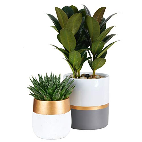 TIMEYARD Plant Pots Indoor Set of 2, White Ceramic 6in Planters for Flowers, Succulents, with Gold and Grey Detailing, Mid Century Modern Home Garden Decor