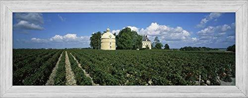 - Easy Art Prints Panoramic Images's 'Castle in a Vineyard, Chateau Latour, Pauillac, Bordeaux, Medoc, France' Premium Framed Canvas Art - 30