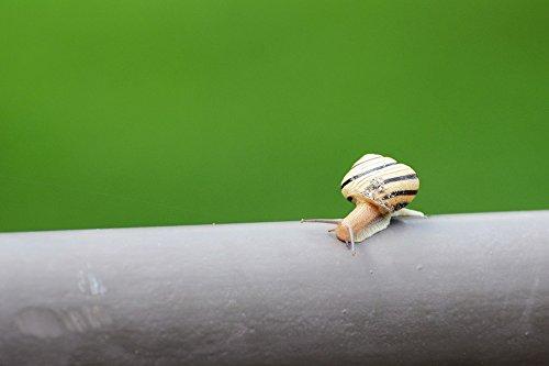 - Home Comforts LAMINATED POSTER Nature Slow Snail Macro Small Slug Slimy Poster