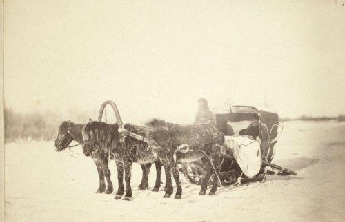 A Siberian posting sledge drawn by three horses Vintage Black & White Photogr a6