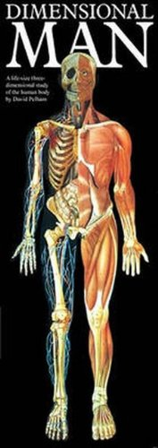 Dimensional Man/life-size Pop-up Figure-wall Chart Prentice Hall & IBD 9780671703424 Anatomy Body Human Diet / Health / Fitness Family & health General HEALTH & FITNESS / General Health & Fitness/General Human anatomy Medical Medical / Anatomy