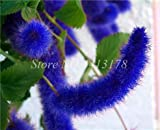 AGROBITS 100 pcs/Bag Exotic Acalypha Hispida Plant Outdoor Bonsai Potted Garden Blooming Flower Planta Seedfor Home Decor Easy to Grow: 3