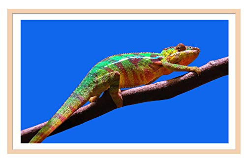 Poster Set Branches - Pigbangbang Burlywood Solid Wood Large Frame 10X13 Chameleon Branches Blue Sky Wall Frame Poster Frame Wall Set, Home and Wall Decorations Gallery Wall Frame