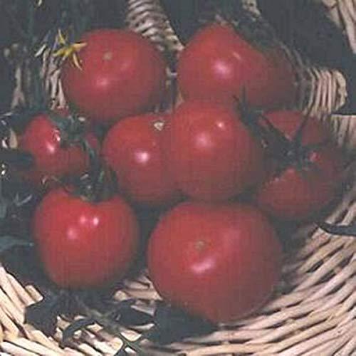 Casavidas Seeds: Best Boy F1 Tomato Seed