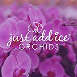 Just Add Ice J-424 Orchid Easy Care Live