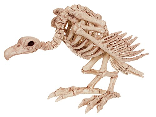 Bone Shelf Display Box - Crazy Bonez Skeleton Vulture