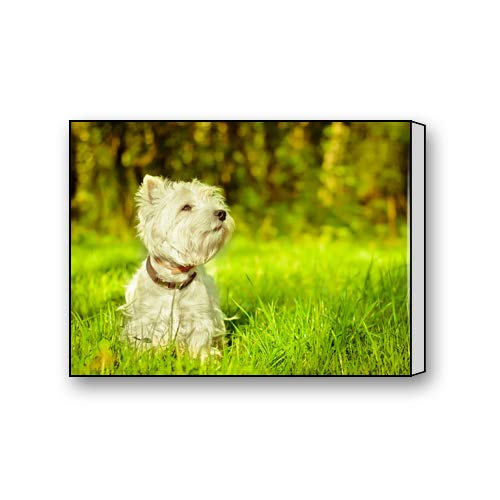 (Du Art Gifts West Highland White Terrier Dog Custom Canvas Print Personal Photos Print on Canvas Ready to Hang on Your Wall as a Modern Art 16