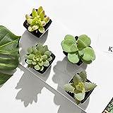 Set of 4 Mini Assorted Green Artificial Succulent