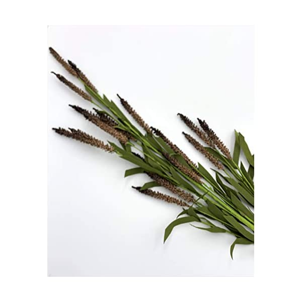Elegant Blooms & Things Brown Mini Cattail Floral Long Stem, Faux, Urns, Tall, Arrangements, Spray, Accent