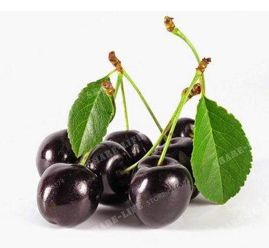 New Black Cherry Tree 10+ Seeds ()