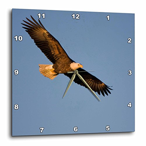 3dRose Bald Eagle In Flight Over Mississippi River - Wall Clock, 13 by 13-Inch - Outlets Mississippi In