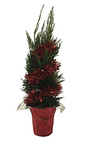 Premier Plant Solutions 21802X Holiday Leyland Cypress 1 Gallon (Cupressocypress X Leylandii), Green