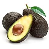 Cold Hardy Avocado Tree - up to 3 ft. Tall Trees, Ready to Give Fruit the 1st Year - (Mexicola Grande) - Get Delicious Avocados Year Round from This Fruit Tree by Brighter Blooms Nursery