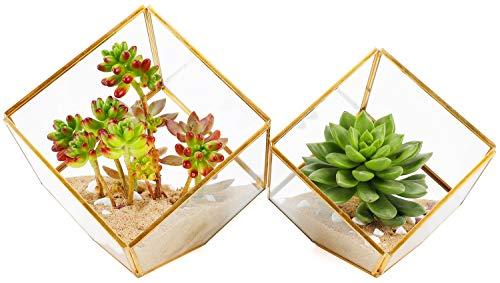 ElegantLife Succulent Terrarium, Geometric Decorative Cubic Moss Glass Leak Proof Pot Tabletop Flower Plant Box Planter (No Plant Included) (Cubic, -