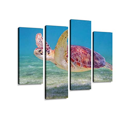 (Green Sea Turtle in Caribbean Sea Riviera Maya Cozumel Mexico Canvas Wall Art Hanging Paintings Modern Artwork Abstract Picture Prints Home Decoration Gift Unique Designed Framed 4 Panel)