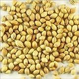 Coriander Seeds 14 Oz