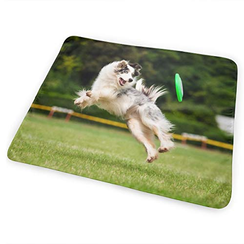 - Pamdart Border Collie Flapping Green Frisbee Personalized Waterproof Leakproof Replacement Diaper Pad Reusable for Unisex Baby