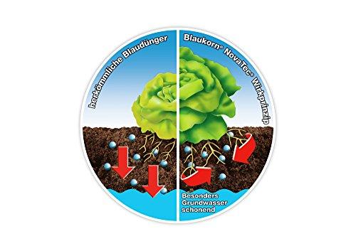 Compo 1391266 3 Kg Blaukorn Novatec Npk Fertiliser Bag 2x37x149 Cm