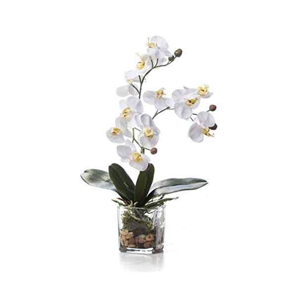 Petals - Faux Phalaenopsis Orchid Accent - White - Amazingly Lifelike - Vibrant Colors - Hand-Crafted - 14 x 9 Inches
