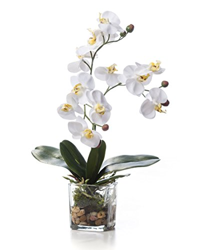 Petals – Faux Phalaenopsis Orchid Accent – White – Amazingly Lifelike – Vibrant Colors – Hand-Crafted – 14 x 9 Inches