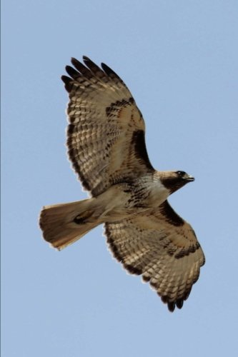 Red Tailed Hawk in Flight Journal: 150 page lined notebook/diary