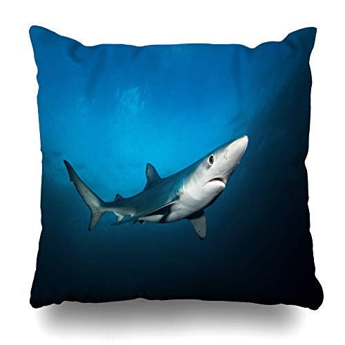 Ahawoso Throw Pillow Cover Hunt Body Blue Shark Prionace Glauca Atlantic Ocean Africa Nature Dangerous Deep Dive Fast Design Home Decor Pillow Case Square Size 18x18 Inches Zippered Pillowcase ()