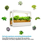 TORCHSTAR Indoor Herb Garden, Plant Grow LED Light