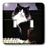 3dRose lsp_575_2 Tuxedo Cat - Double Toggle Switch