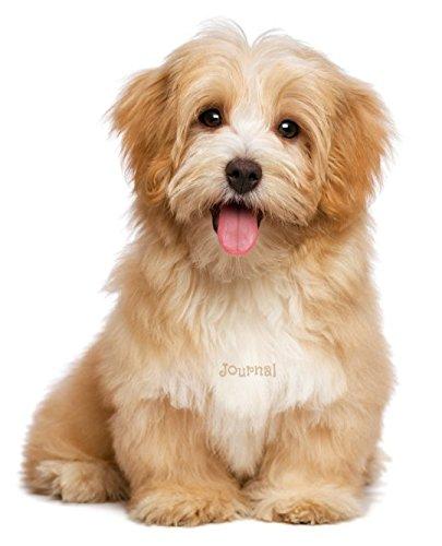 Journal: Havanese Puppy