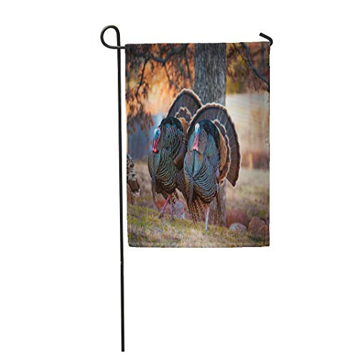 Gobbler Spring - Semtomn Garden Flag 28x40 Inches Print On Two Side Polyester Two Male Turkeys Strutting on Grassy Meadow Full Feather Displayed Trot Mature Home Yard Farm Fade Resistant Outdoor House Decor Flag