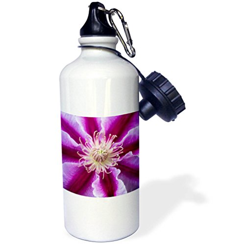 3dRose Danita Delimont - Flowers - Germany, Freinsheim, Flower - 21 oz Sports Water Bottle (wb_277392_1)