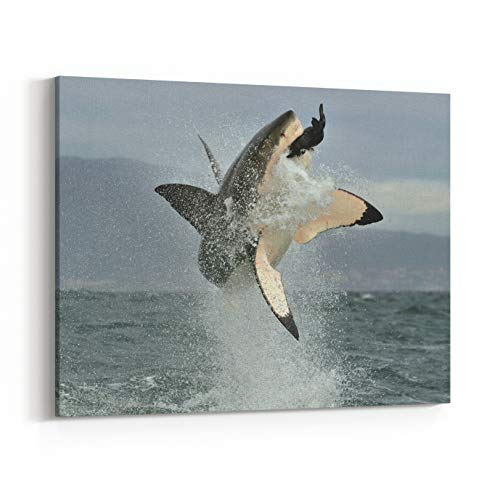 Rosenberry Rooms Canvas Wall Art Prints - Great White Shark Carcharodon Carcharias Breaching in an Attack Hunting of A Great White Shark Carcharodon Carcharias South Africa (14 x 11 -