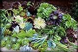 50 Succulent Cuttings Unique Varieties Cactus Succulent Plants Rare MHWK52