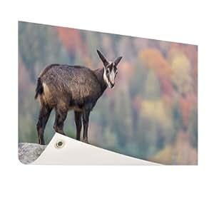 Cabra en una roca–Foto en jardín Póster–X cm (formatos disponibles: 60x 40, 120x 80, 200x 100) Top de calidad Jardín Banner.