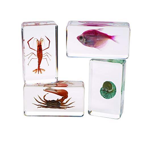 Excellerations Acrylic Specimens, 2.8-3 inches L, Sea Creatures, 4 Pieces, STEM Education, Science Kits, Preschool
