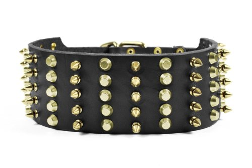 Dean & Tyler Wide Heaven Dog Collar with Brass Spikes/Studs/Buckle, 32 by 2-3/4-Inch, Black