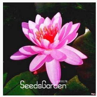 Semillas de agua, las semillas Balcón de flores, jardín del agua, 30Pcs / Lot, Sv9Z7Z: 17: Amazon.es: Jardín