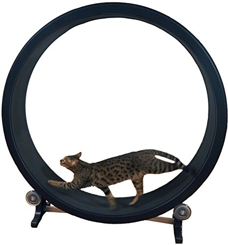 One Fast Cat Exercise Wheel 41I61wqBLoL