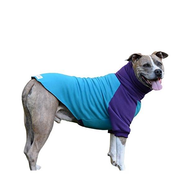 Tooth & Honey Dog Sweater/Pitbull/Large Dog/French Bulldog/Colorblock Sweatshirt/Pullover 1