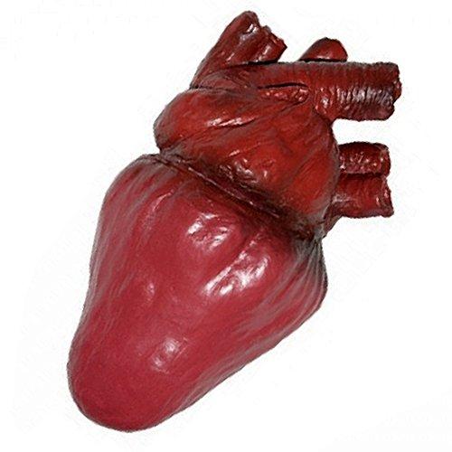 Life Size Foam Heart Gory Halloween Prop ()