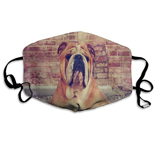 Bulldog Brick Wall Dog Great Dust Mouth Mask Reusable Anti-Dust Face Mask Adjustable Earloop Skin Protection