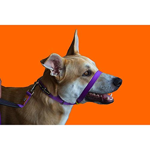 Canny Anti-Pull Dog Collar (Size 4) (Purple) by Canny